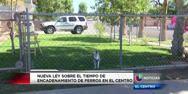 Nueva ley sobre el tiempo de encadenamiento de perros