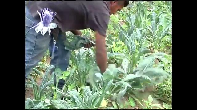 VIDEO: Anuncian préstamos para agricultores de la costa central