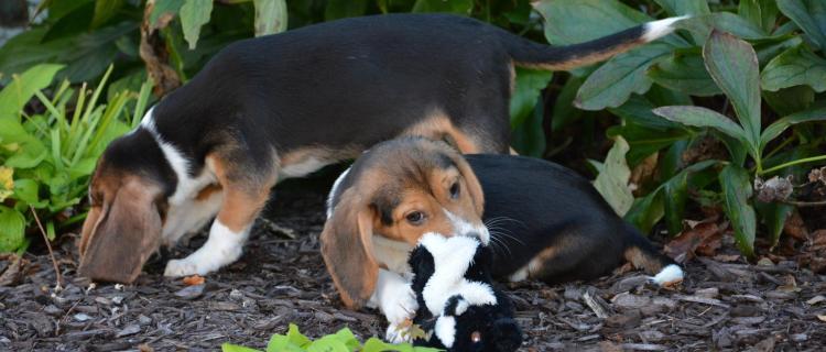 Holanda: Primer país sin perros abandonados