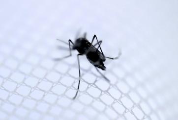 Epidemia mortal de dengue en Honduras está atacando a los más pequeños
