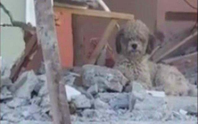 VIDEO: Espera a su familia sobre escombros tras sismo en Ecuador, pero todos murieron