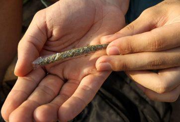 Encuesta revela cifra récord de personas en pro de legalizar la marihuana