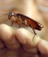 Empresa china forzó a empleados a beber orina y comer cucarachas