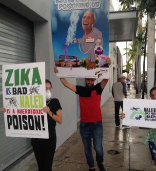 Mosquitos pueden trasmitir el zika a los huevos y larvas, dice estudio