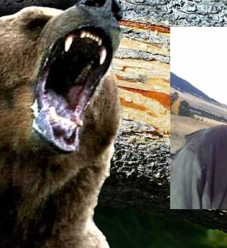 VIDEO: Hombre muestra heridas tras ataques de osa grizzly