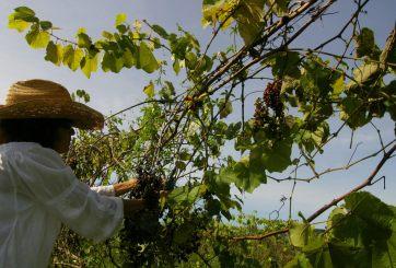 VIDEO: Histórica resolución sobre pesticidas en Greenfield
