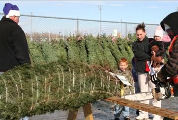 Detienen en frontera más de mil pinos navideños por plaga