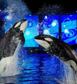 Más de 300 despidos en SeaWorld