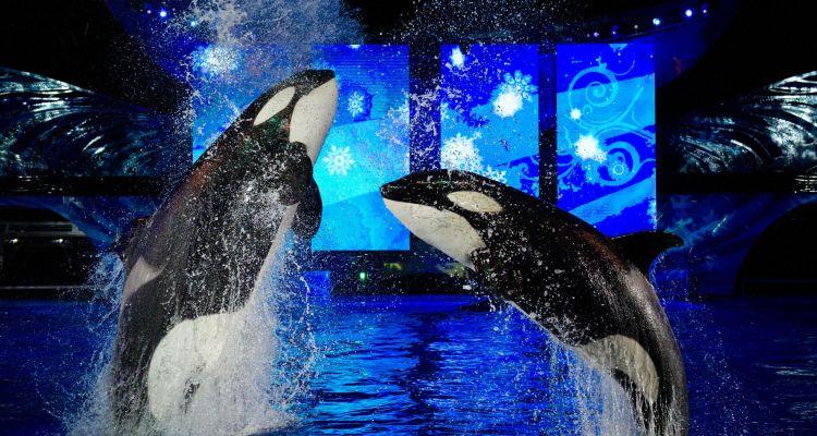 Busch Gardens y SeaWorld cierran sus puertas hasta finales de marzo