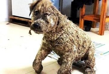 ¡Abominable! Cubren a perrito con pegamento por diversión