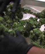 VIDEO: ¿Qué pasará ahora tras la legalización de la marihuana?