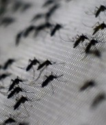 Texas confirma transmisión local del virus del Zika