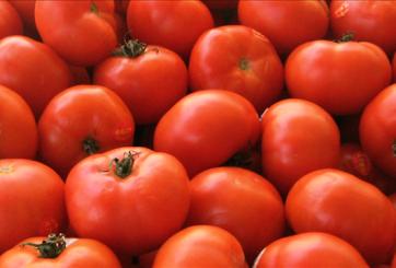Agricultores de México en crisis por rechazo de tomate y cebolla en E.E.U.U.