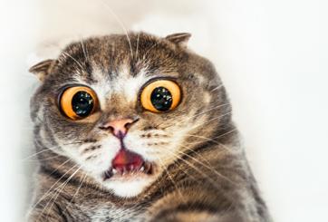 Quieren prohibir gatos en comunidad de Nueva Zelanda