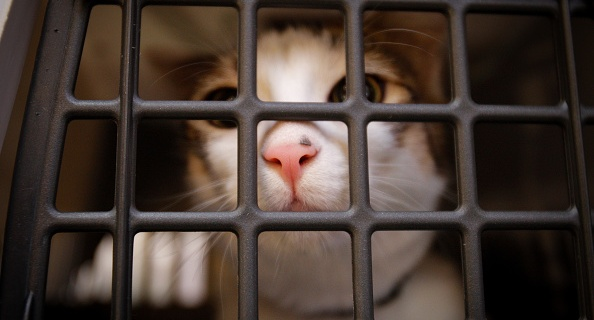 Ofrecen recompensa por torturadores de un gato en Utah