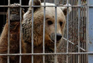 Oso arranca la mano de niño en zoológico de Cisjordania