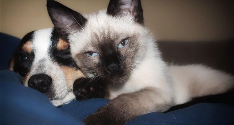 Estudio determina si gatos o perros son más inteligentes