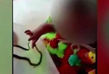 Enfrenta cargos madre que dejó que serpiente mordiera a su bebé