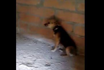 Calor los obliga a instalar aire acondicionado en la casa de las mascotas