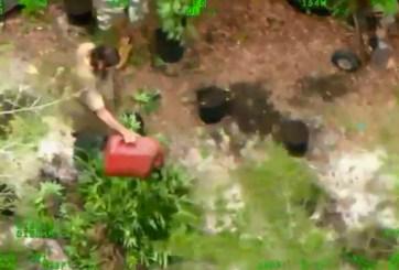 Helicóptero capta a criminales quemando plantas de marihuana en Florida