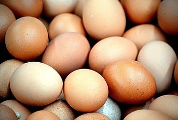 Un huevo al día para terminar con la desnutrición infantil, estudio