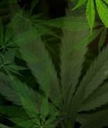 Cámara de Representantes aprueba legalización de la marihuana