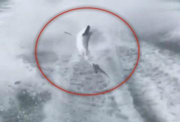 Arrestan a los 3 hombres que arrastraron un tiburón en Florida