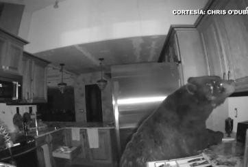 VIDEO: Un oso se pasea dentro de una vivienda en Colorado Springs
