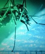 Residente de Fort Collins da positivo al virus del nilo