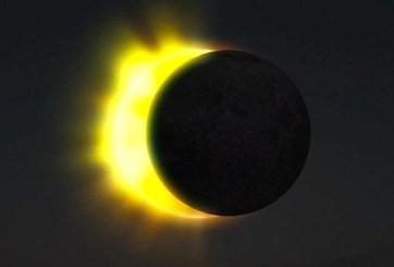 VIDEO: Los efectos de un eclipse solar en los animales y el clima