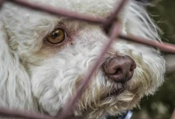 Personas que abandonaron a sus mascotas en Irma podrían ir a la cárcel