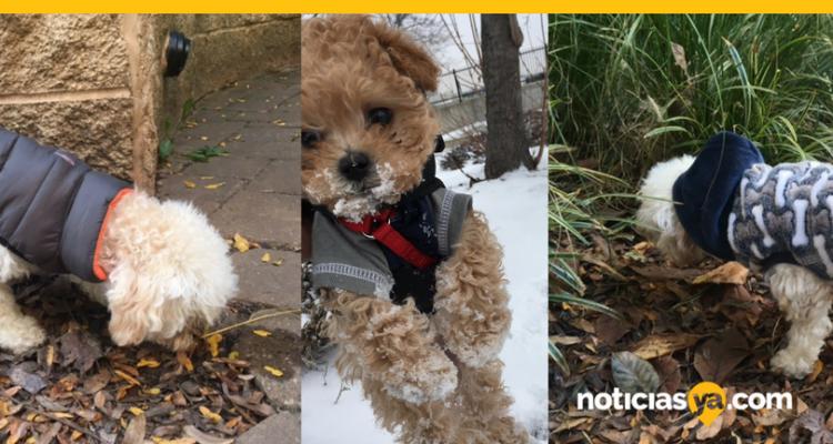 VIDEO: En el frío también tus mascotas necesitan protegerse