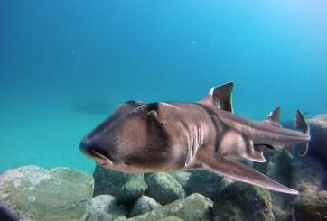 VIDEO: Mujer libera a un tiburón, lo salvó con las manos