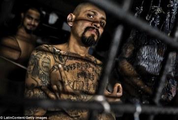 VIDEO: Más de 200 miembros de la MS13 fueron detenidos por ICE