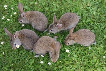 VIDEO: Campaña polaca pide a sus habitantes «reproducirse como conejos»