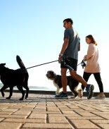VIDEO: ¿Quieres vivir más tiempo? Consigue un perro