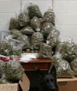 Arrestan a pareja de ancianos con 60 libras de marihuana