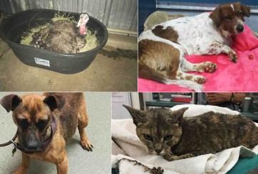 Buscan a los dueños de mascotas rescatadas durante incendio en San Diego