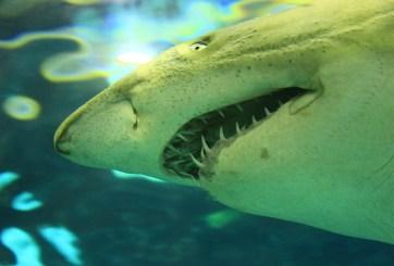 Encuentran 2 tiburones muertos y congelados en playa en Massachusetts