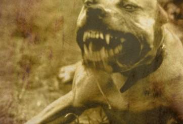 Hombre apuñala mortalmente a perro pitbull cuando atacaba a su hija