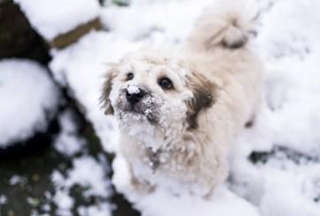 FOTOS: Perrito ciego y con cáncer sobrevivió 5 días en la nieve