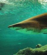 FOTOS: Dejan destazados 300 tiburones sobre carretera mexicana