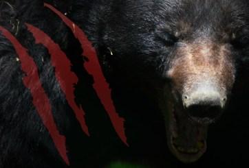 VIDEO: Niña de 5 años atacada por oso en el patio de su casa de Colorado