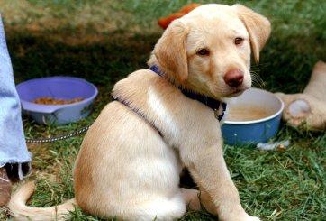 Adopta una mascota en San Valentín con precio especial en San Diego