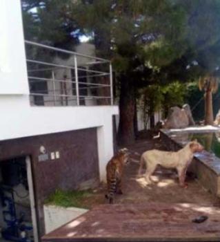 leona ataca a dueno