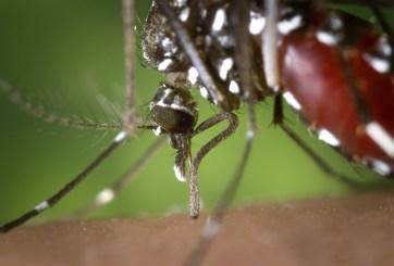 Contrajo raro virus de mosquito y en 9 días sufrió muerte cerebral