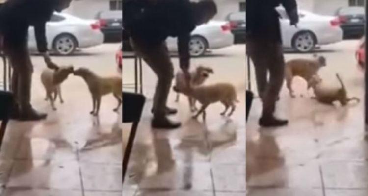 Apuñaló a un perro en México y en redes sociales piden venganza