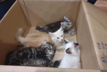 gatitos de contrabando