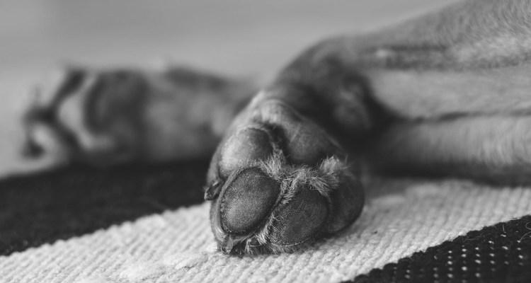 Las desgarradoras imágenes del perro congelado que tiraron a la basura