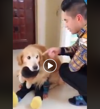 Al paracer a este perrito no le gustó que regañaran a su pequeño amo